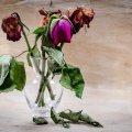 Réparer un chagrin d'amour